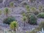 Phoenix habitats / Hábitats de Phoenix