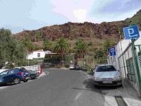 P-canariensis-Gran-Canaria-fields-D-Rivera
