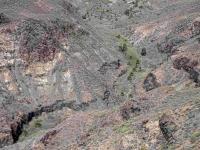 P-canariensis-Gran-Canaria-gullies-3-D-Rivera
