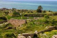 P-dactylifera-Byblos-ruins-2-D-Rivera