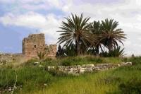 P-dactylifera-Byblos-ruins-3-D-Rivera
