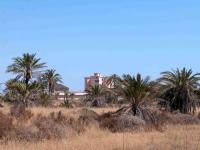 P-dactylifera-Cabo-de-Palos-D-Rivera