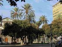 P-dactylifera-Gran-Canaria-San-Telmo-Gdns-plantation-D-Rivera