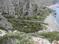 P-theophrasti-Megalospotamos-River-Preveli-2-C-Obon