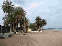 P-theophrasti-Stalis-beach-3-C-Obon