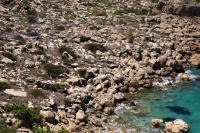 P-theophrasti-among-the-rocks-near-Moni-Krysikalitisos-2-D-Rivera