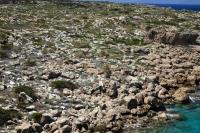 P-theophrasti-among-the-rocks-near-Moni-Krysikalitisos-3-D-Rivera